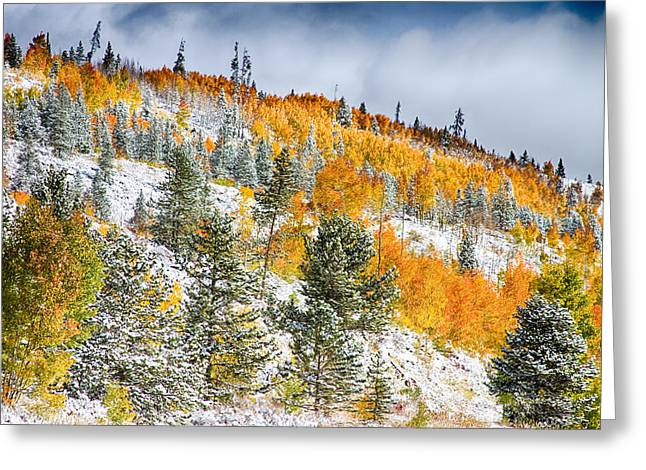 Summit County Greeting Cards - Colorado Rocky Mountain Snowy Autumn Colors Greeting Card by James BO  Insogna