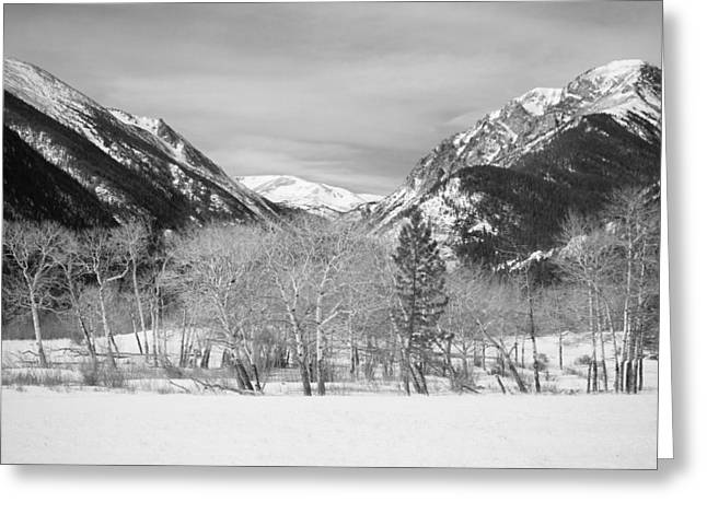 Snow Tree Prints Greeting Cards - Colorado Rocky Mountain Winter Horseshoe Park BW Greeting Card by James BO  Insogna