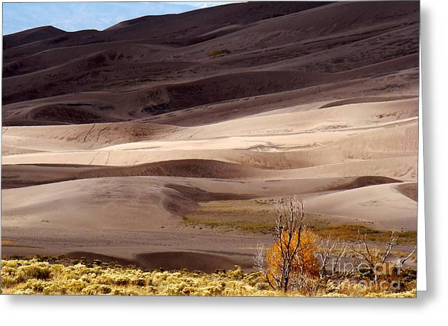 Colorado Sand Dunes Greeting Card by Eva Kato