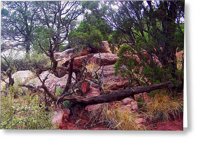 Landscape Posters Greeting Cards - Colorado trail view 1 Greeting Card by Chris Flees