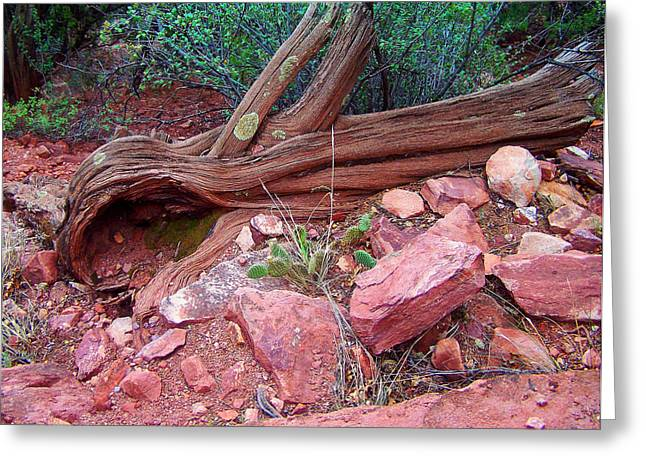 Landscape Posters Greeting Cards - Colorado Trail View 2 Greeting Card by Chris Flees