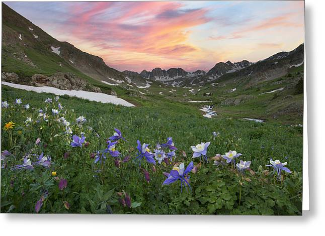 Wildflower Photos Greeting Cards - Colorado Wildflower Images - Columbine at American Basin 2 Greeting Card by Rob Greebon