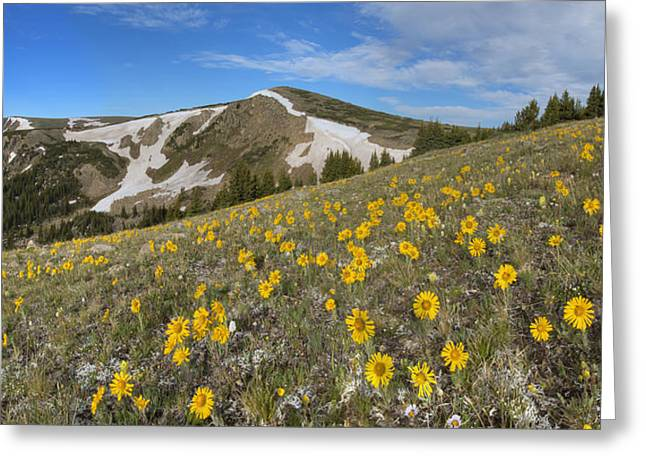 Berthoud Greeting Cards - Colorado Wildflower Images - Sunflowers on Top of Berthoud Pass  Greeting Card by Rob Greebon