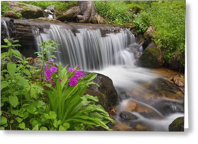 Colorado Wildflowers On Berthoud Pass 2 Greeting Card by Rob Greebon