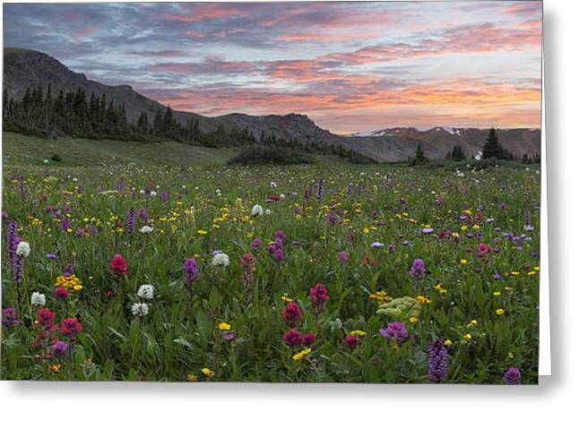 Berthoud Greeting Cards - Colorado Wildflowers Panorama - Butler Gulch Colors 1 Greeting Card by Rob Greebon