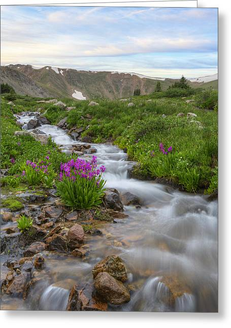 Wildflower Photography Greeting Cards - Colorado Wildflowers - Rocky Mountain Stream and Parrys Primros Greeting Card by Rob Greebon