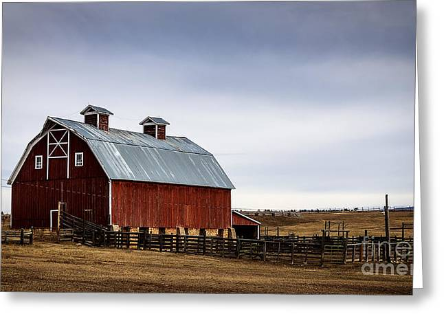Tin Roof Greeting Cards - Colorado Winter Barn Greeting Card by Janice Rae Pariza