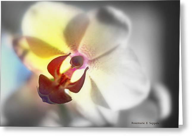 Over Easy Greeting Cards - Colored Focal Point Phalaenopsis Orchid Greeting Card by Rosemarie E Seppala
