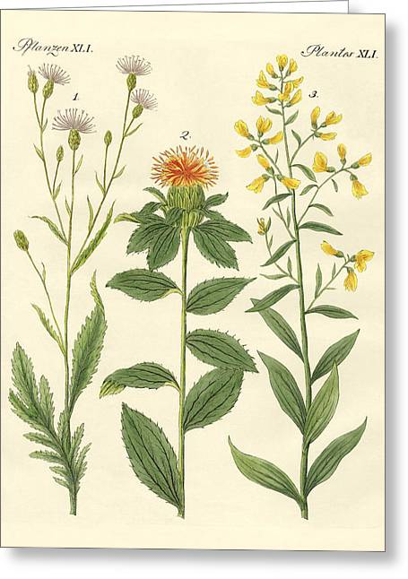 Saw Drawings Greeting Cards - Colored plants Greeting Card by Splendid Art Prints