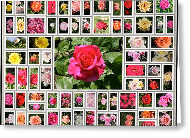 Medium Pink Greeting Cards - Colored roses Greeting Card by Stefano Senise