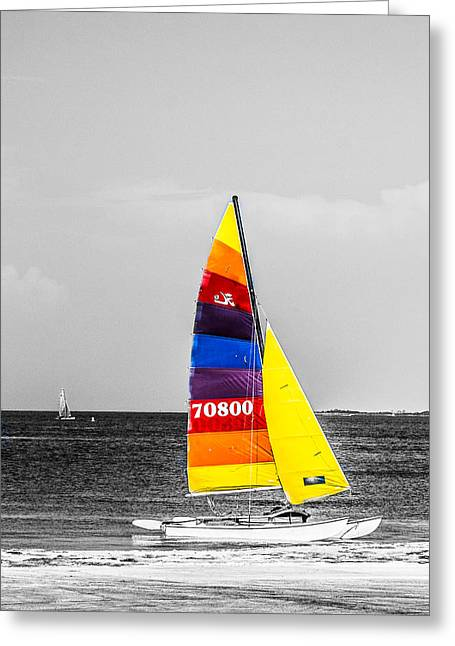 Sailer Greeting Cards - Colored Sails Greeting Card by Shelby  Young