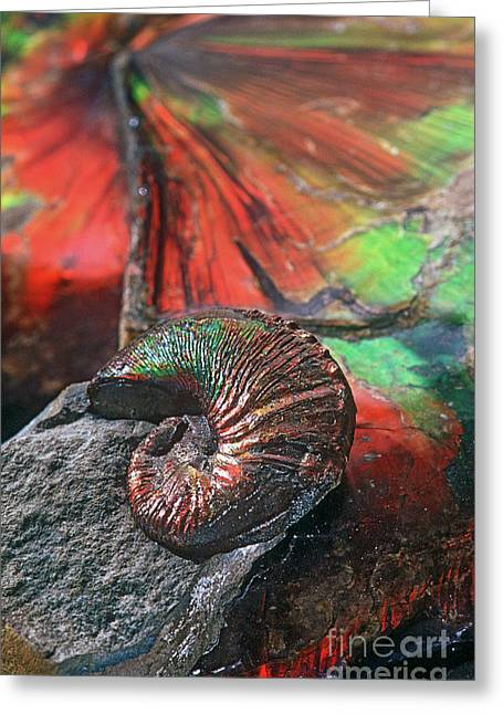 Fossilized Shell Greeting Cards - Colorful Ammonite Greeting Card by James L. Amos