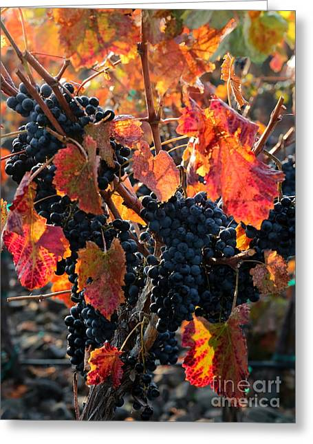 Colorful Autumn Grapes Greeting Card by Carol Groenen