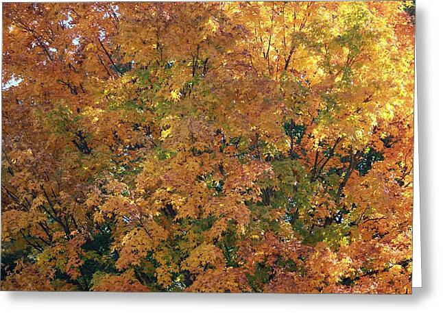 Laura Watts Greeting Cards - Colorful Autumn Greeting Card by Laura Watts