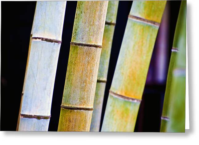 Patterned Greeting Cards - Colorful Bamboo Greeting Card by Bill Brennan - Printscapes