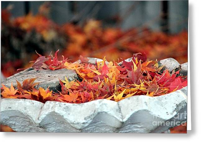 Red Fallen Leave Photographs Greeting Cards - Colorful Bird bath Greeting Card by Yumi Johnson