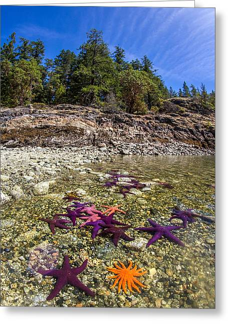 Colorful British Columbia Shoreline  Greeting Card by Pierre Leclerc Photography