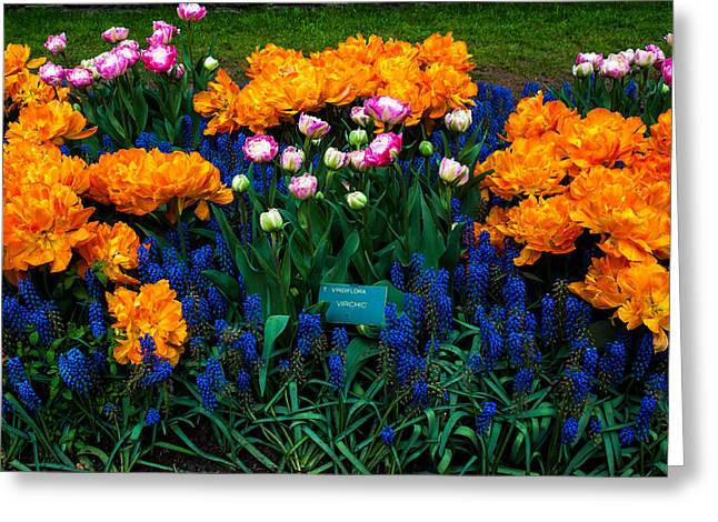 Crazing Greeting Cards - Colorful Carpet of Flowers in Keukenhof. Netherlands Greeting Card by Jenny Rainbow