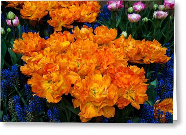 Crazing Greeting Cards - Colorful Carpet of Flowers. Keukenhof 2014. Netherlands Greeting Card by Jenny Rainbow