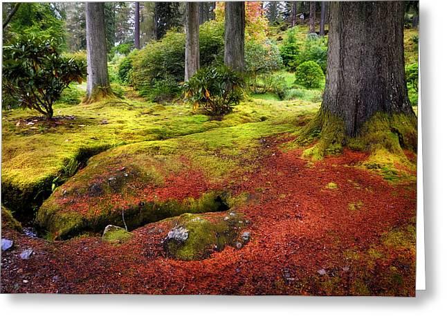 Evgeniya Vlasova Greeting Cards - Colorful Carpet of Moss in Benmore Botanical Garden. Scotland Greeting Card by Jenny Rainbow