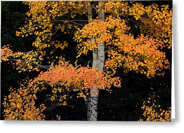 Colorful Contrast Greeting Card by Leland D Howard