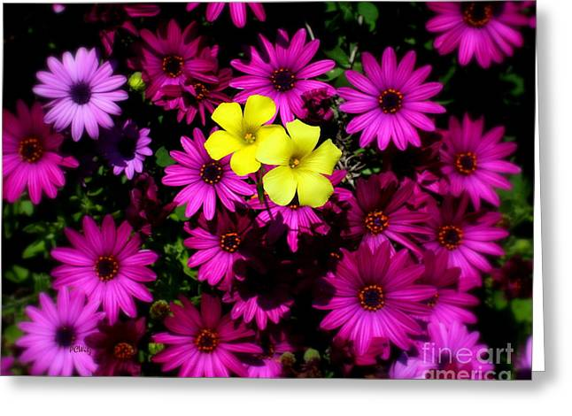 Fushia Greeting Cards - Colorful Contrast Greeting Card by Patrick Witz