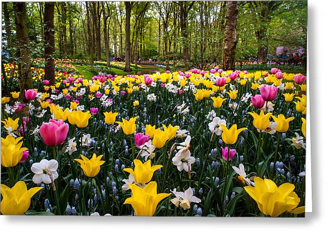 Crazing Greeting Cards - Colorful Corner of the Keukenhof Garden 1. Tulips Display. Netherlands Greeting Card by Jenny Rainbow