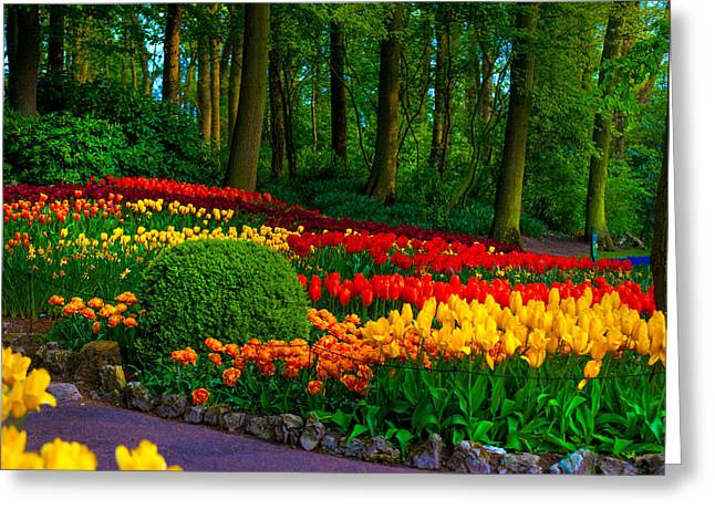 Crazing Greeting Cards - Colorful Corner of the Keukenhof Garden 4. Tulips Display. Netherlands Greeting Card by Jenny Rainbow