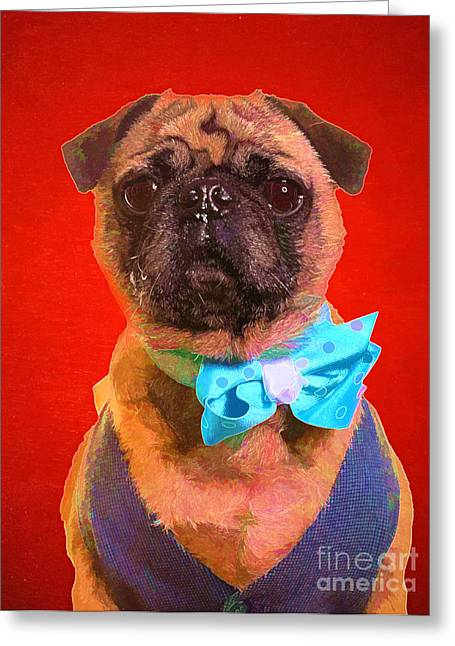 Dogs. Pugs Greeting Cards - Colorful Dapper Pug Greeting Card by Edward Fielding