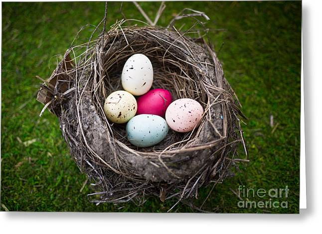 White Background Greeting Cards - Colorful eggs in nest Greeting Card by Edward Fielding