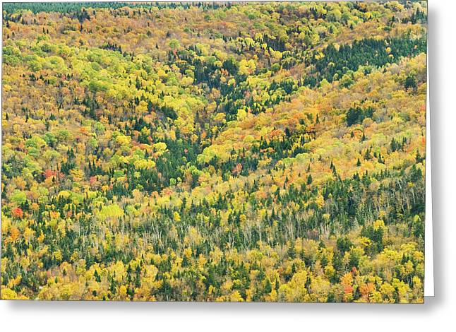 Height Greeting Cards - Colorful Fall Forest Near Rangeley Maine Greeting Card by Keith Webber Jr