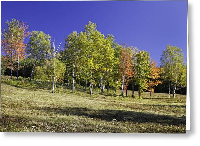 Maine Landscape Greeting Cards - Colorful Fall Trees on Center Hill Mount Blue State Park in Maine Greeting Card by Keith Webber Jr