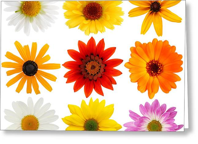 Maxi-dress Greeting Cards - Colorful  flower beauty Greeting Card by Boon Mee