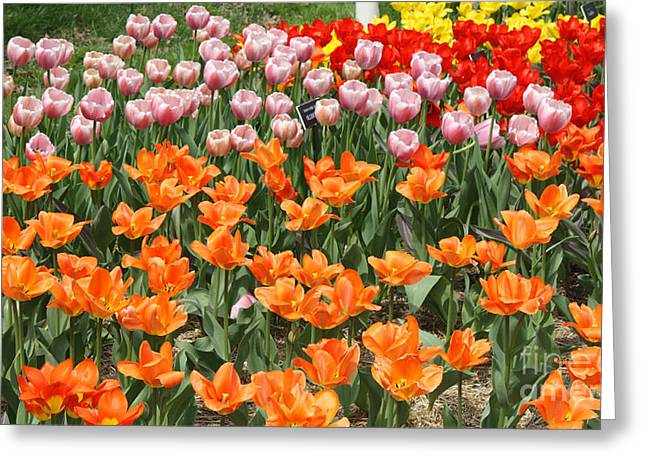 Art In Acrylic Greeting Cards - Colorful Flower Bed Greeting Card by John Telfer