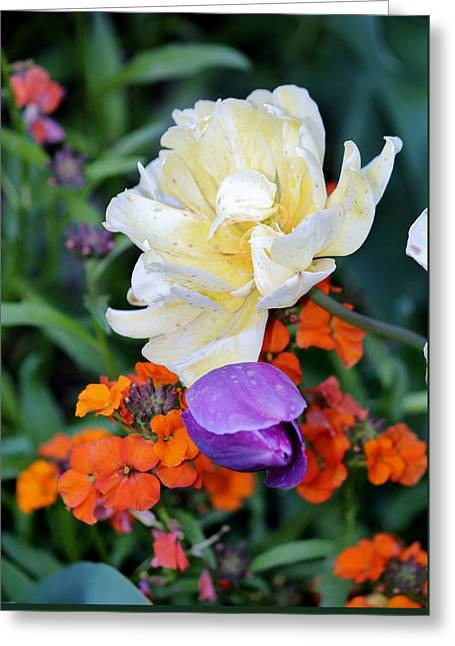 Colorful Flowers Greeting Card by Cynthia Guinn