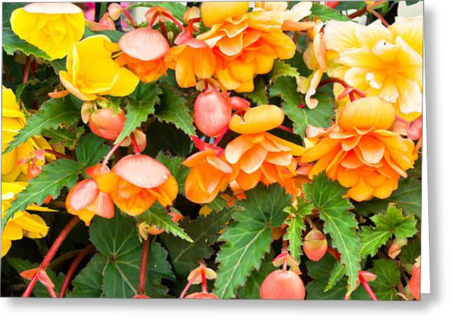 Blooms Greeting Cards - Colorful flowers Greeting Card by Tom Gowanlock