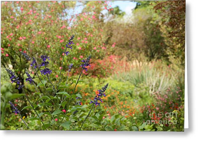 Florida Flowers Greeting Cards - Colorful Garden in Spring Greeting Card by Sabrina L Ryan