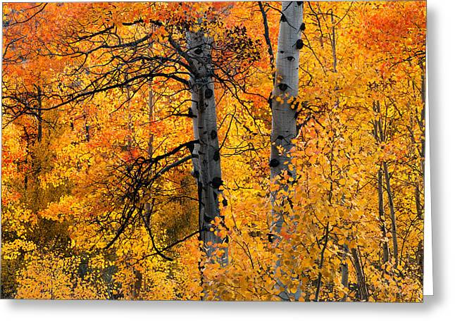 Colorful Glow Greeting Card by Leland D Howard