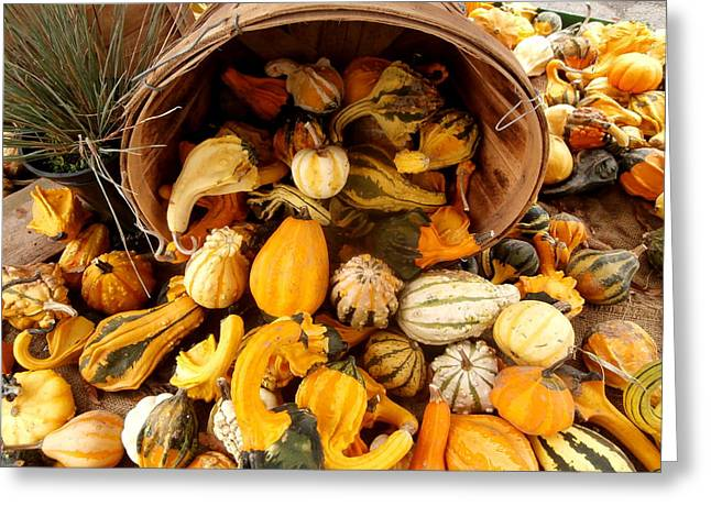 Kate Gallagher Greeting Cards - Colorful Gourds Greeting Card by Kate Gallagher
