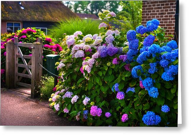 Jenny Rainbow Photographs Greeting Cards - Colorful Hydrangea at the Gate. Giethoorn. Netherlands Greeting Card by Jenny Rainbow