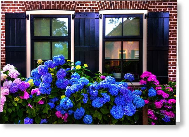 The North Greeting Cards - Colorful Hydrangea at the Windows. Giethoorn. Netherlands Greeting Card by Jenny Rainbow