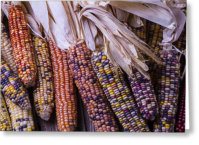 Colorful Indian Greeting Cards - Colorful Indian Corn Greeting Card by Garry Gay