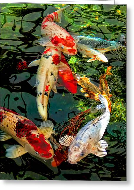Water Garden Greeting Cards - Colorful  Japanese Koi Fish Greeting Card by Jennie Marie Schell