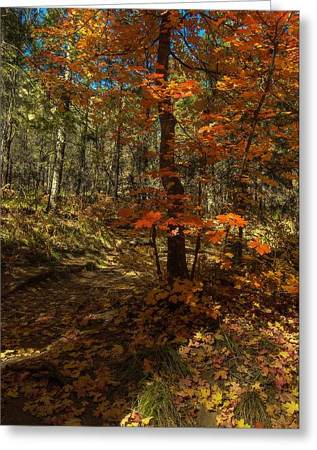 West Fork Greeting Cards - Colorful Path Greeting Card by Tam Ryan