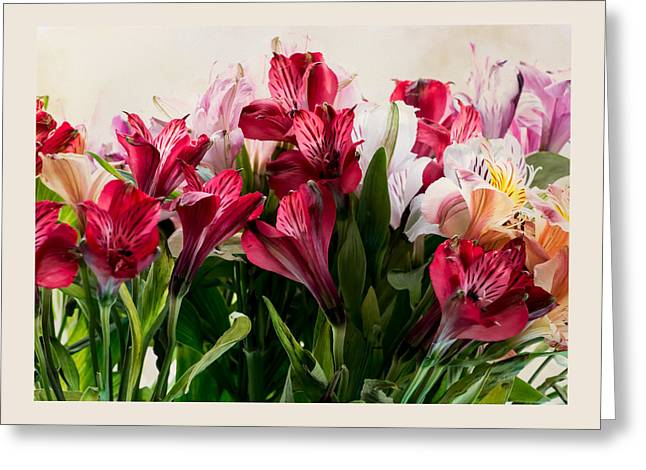 Colorful Peruvian Lillys Greeting Card by Donna Lee
