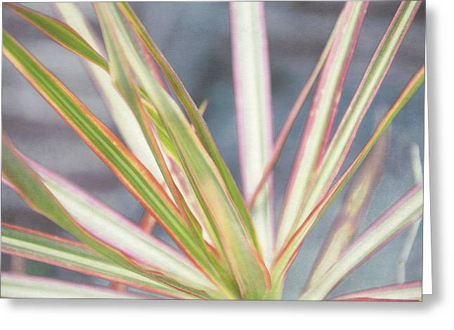 Cordylines Greeting Cards - Colorful Plant Greeting Card by Louise Hill