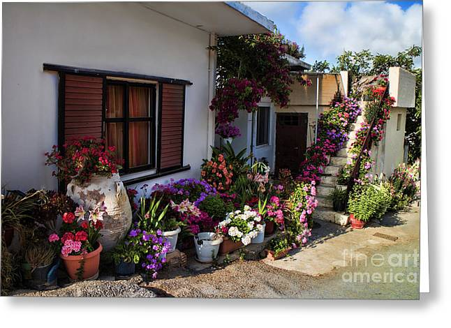 Crete Greeting Cards - Colorful potted flower garden at a rural home in Crete Greeting Card by David Smith