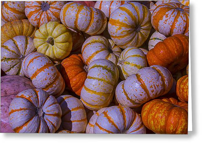 Mini Pumpkins Greeting Cards - Colorful pumpkins Greeting Card by Garry Gay