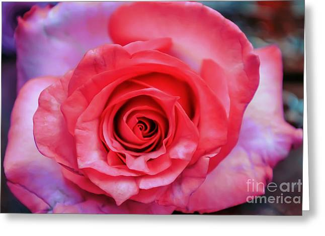 Wedding Salon Greeting Cards - Colorful Rose Greeting Card by Renee Barnes