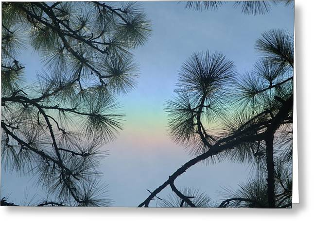Pine Needles Paintings Greeting Cards - Colorful Sky Greeting Card by Ione Hedges